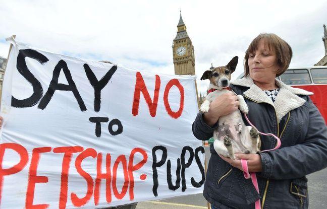 En mai 2017 à Londres, des Britanniques demandent l'interdiction de la vente de chiots de moins de six mois dans les animaleries.