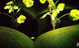 Des chercheurs du MIT ont mis au point des plantes lumineuses qui pourraient, un jour, remplacer les lampes de chevet.