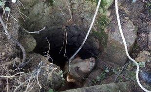 Un jeune taureau de 300 kilos a été extrait d'un puits par les pompiers du Gers.