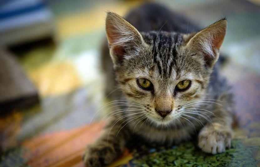 Italie : Un couple survit à un glissement de terrain grâce à ses chats