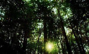 Une micro-forêt va être plantée sur le campus de l'Université Paul-Sabatier de Toulouse.