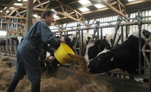 Jean-Yves Gallais, éleveur laitier, nourrit ses vaches le 09 septembre 2009 dans son exploitation au Rheu, en Ille-et-Villaine