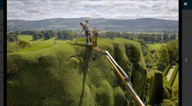 Video il taille les haies les plus hautes du monde for Jardinier professionnel