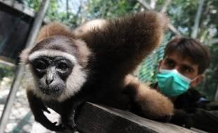 Depuis l'âge de 18 ans, un Français vit en pleine jungle, parmi les singes gibbons, pour les sauver de l'anéantissement que leur promet la déforestation. Seul, il se dresse contre les multinationales et les responsables corrompus. Parfois au risque de sa vie.