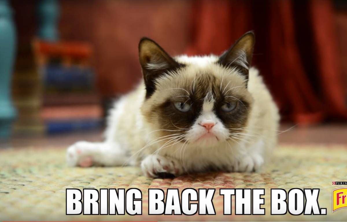 Capture d'écran d'une publicité Friskies avec Grumpy Cat. – DR
