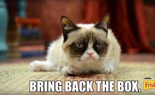 Capture d'écran d'une publicité Friskies avec Grumpy Cat.