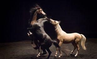 Le spectacle de théâtre équestre se poursuit jusqu'au 14 septembre sur la place des Quinconces à Bordeaux.