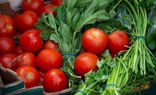 Tomates, menthe et basilic. (Illustration)
