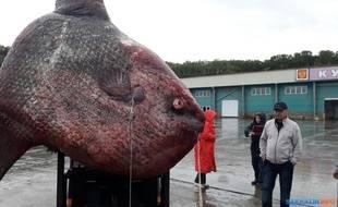 Ce poisson lune pèse plus d'une tonne