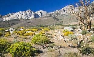 Plantes de la Sierra Nevada, en Californie.