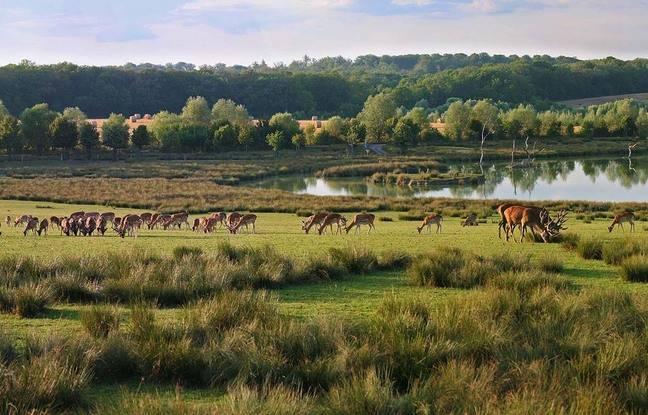La plaine des cerfs vue d'un lodge, au parc de Sainte-Croix, en Moselle.