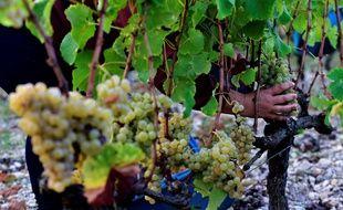 Une exploitation viticole lors des vendanges (image d'illustration).