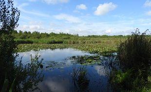 La tourbière de Marchiennes deviendra une réserve naturelle nationale dans deux ans