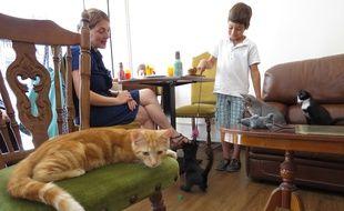 Des cafés à chats ont ouvert dans plusieurs villes en France, ici à Paris.