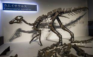 Un squelette de kamuysaurus japonicus reconstitué au Japon.