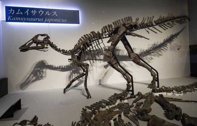 Japon: Des chercheurs découvrent une nouvelle espèce de dinosaure à «bec de canard»