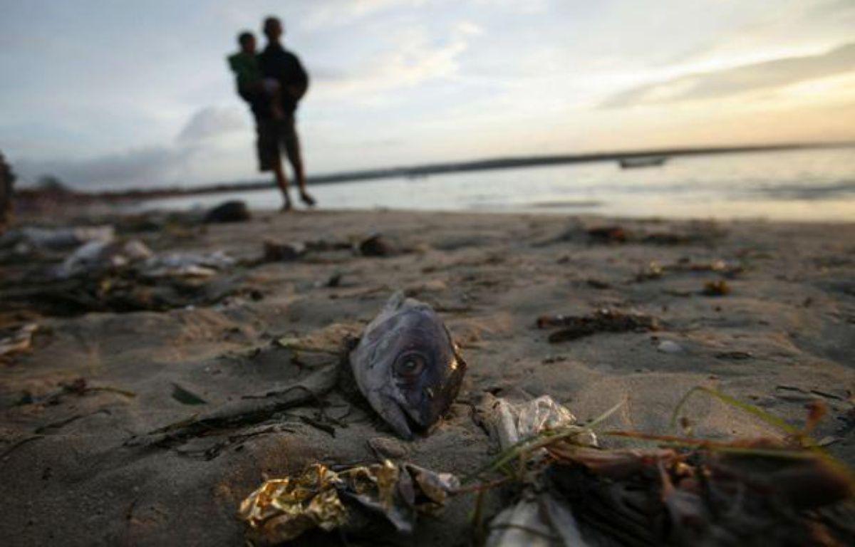Un poisson gît sur une plage de Bali, en Indonésie, en décembre 2007. – Ed Wray/AP/SIPA