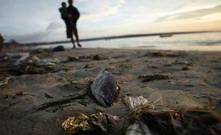 Un poisson gît sur une plage de Bali, en Indonésie, en décembre 2007.