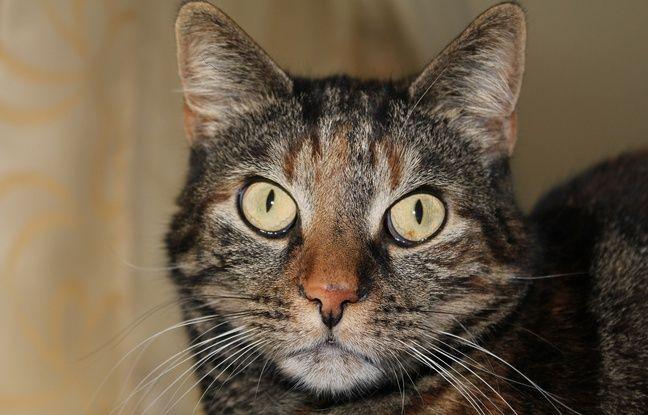 nouvel ordre mondial | Japon: La police enquête sur un chat errant peut-être à l'origine d'une tentative de meurtre