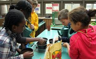 Les élèves de CM2 de l'école primaire Olivier de Serres (Paris 15e) plantent des bulbes.