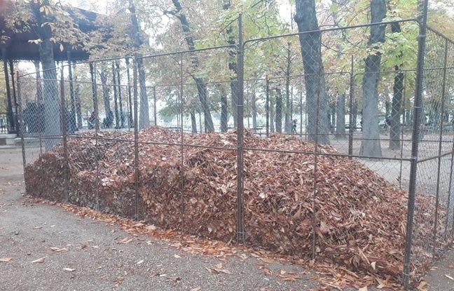 Incendie de Notre-Dame de Paris: Les feuilles mortes du jardin du Luxembourg sont-elles polluées au plomb?