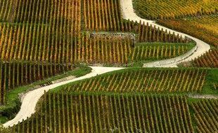 Des vignobles de Champagne à proximité de Reims.