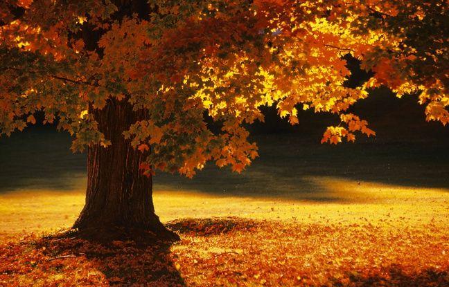 À l'automne, les forêts américaines dégainent leurs plus belles couleurs.