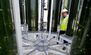 Des tubes de micro-algues dans l'usine de Biofuel systems, en Espagne.