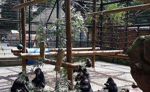 Les célèbres macaques du zoo de l'Orangerie de Strasbourg.