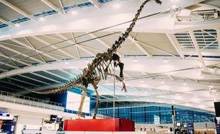 Skinny, un squelette de dinosaure vieux de 150 millions d'années est présenté dans l'un des terminaux de l'aéroport de Londres Heathrow avant sa vente aux enchères en juin 2019