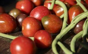 Des tomates et haricots bio (image d'illustration).