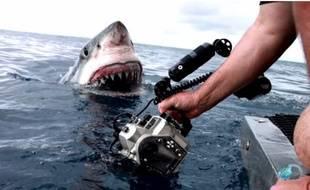 Un requin émerge à un mètre d'une équipe de tournage.