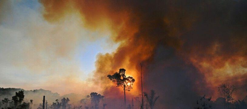 Incendie au Brésil, dans la forêt amazonienne, en août 2020.
