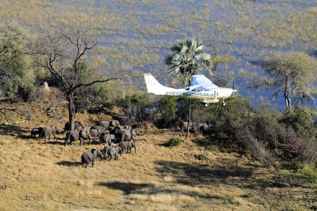 Un avion chargé de recenser les éléphants de la savane africaine, en juillet 2014 au Bostwana.