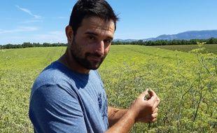 Denis Vernet, du Gaec des Fabres, cultive le fenouil qui sert à faire le Ricard.