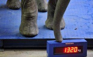 Une équipe internationale de recherche a déterminé que les mammifères terrestres ont atteint leur masse maximum en vingt millions d'années, une évolution qui a vu un animal de la taille d'un chat atteindre celle d'un éléphant, selon des travaux publiés lundi.