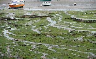 La baie de Locquirec (Finistère) envahie par les algues vertes, le 9 septembre 2013