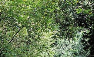 La chasse et la sylviculture vont être interdits dans cette forêt.