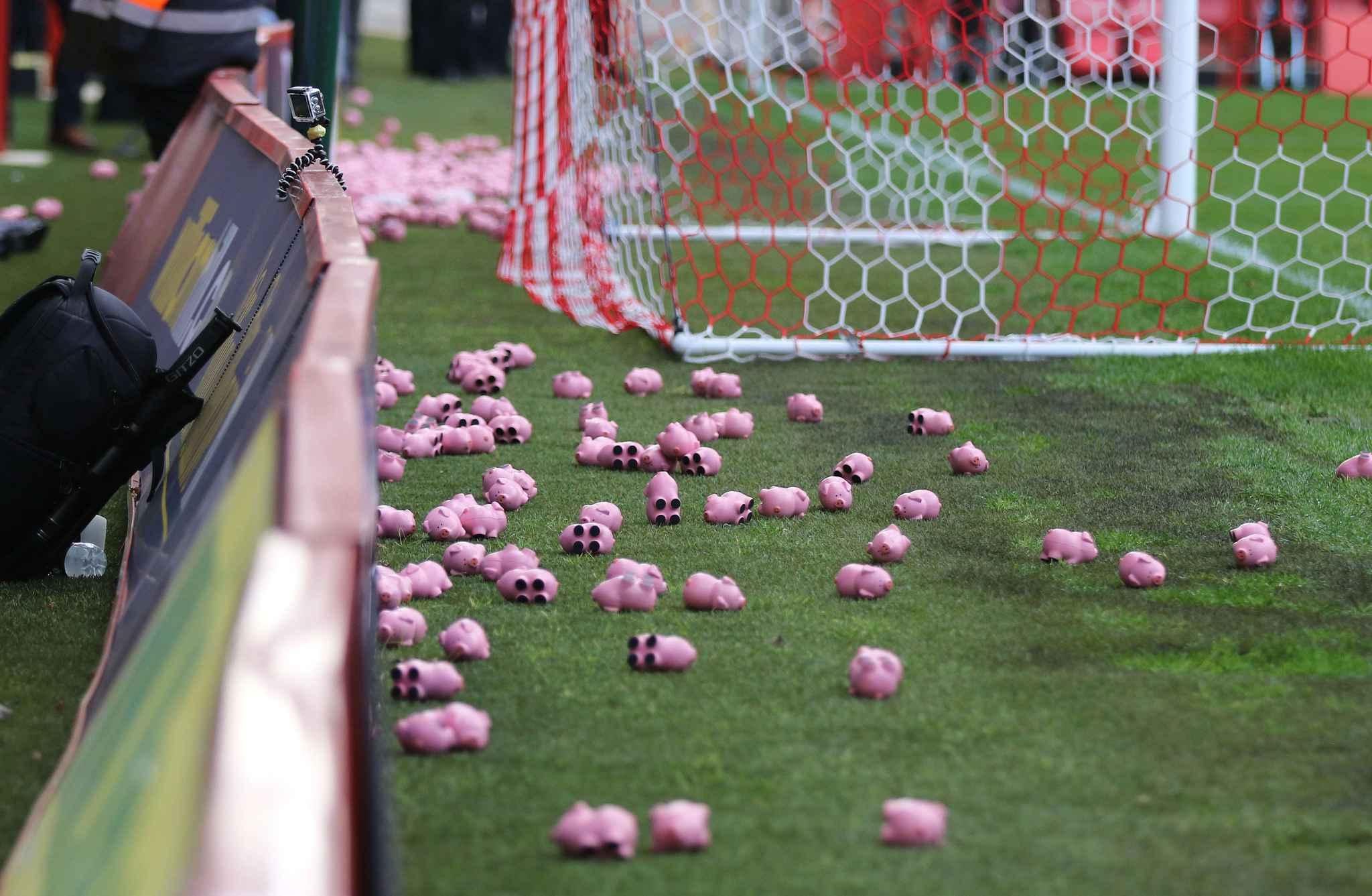video football des supporters anglais interrompent un match en lan ant cochons en plastique. Black Bedroom Furniture Sets. Home Design Ideas
