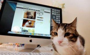 Léo, Rosa, Geapsy, Domino: tous ces chiens, chats et même biquettes sont inscrits sur Yummypets, le premier réseau social français exclusivement dédié aux animaux de compagnies, lancé à la mi-novembre par une société bordelaise et qui compte déjà quelque 4.000 membres.