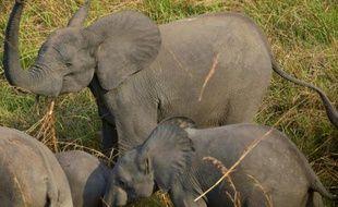 Des éléphants dans le Parc national du Garamba dans le nord-est de la République démocratique du Congo le 7 février 2016