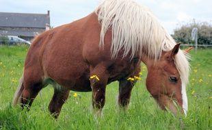 Les chercheurs de Rennes-I ont mis à jour la vie sexuelle des chevaux.