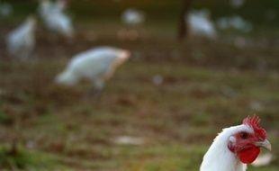 """Un collectif """"Bien vivre dans le Gers"""" s'est créé dans ce département du Sud-Ouest connu pour l'élevage de ses volailles en pleine nature, pour s'opposer à l'implantation de poulaillers industriels, un projet de la coopérative Vivadour."""