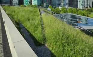Faute d'encadrement juridique adéquat, les toitures végétales sont, à l'heure actuelle, entièrement à la charge des propriétaires.