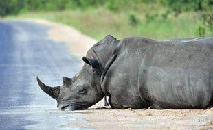 Le 6 février 2013, un rhinocéros au repos dans le parc national Kruger National près de Nelspruit, en Afrique du Sud