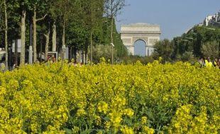 Les Champs-Elysées ont été transformés en un immense jardin dans le cadre de l'opération «Nature capitale» le 23 mai 2010 à Paris.