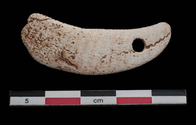 Un pendeloque en coquillage retrouvé sur le chantier de fouilles de Capendu, près de Carcassonne.