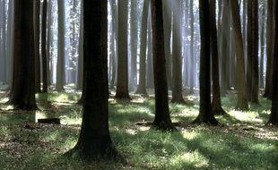 Le port du masque est obligatoire dans la forêt de Soignes comme dans l'ensemble de la région de Bruxelles.