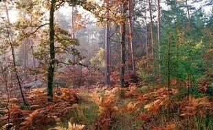 La forêt de Fontainebleau.