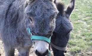 Érable et Écureuil, les deux ânes de la MAS Robert Ramel.
